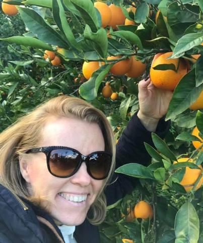 Narancs szüret