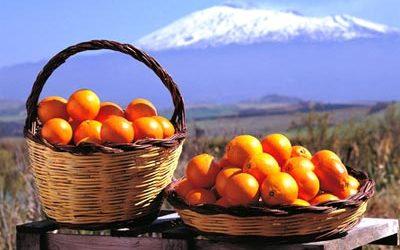 Narancsszüret és Gasztrotúra Szicíliában